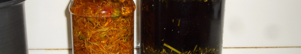 callendula and plantain in a jar